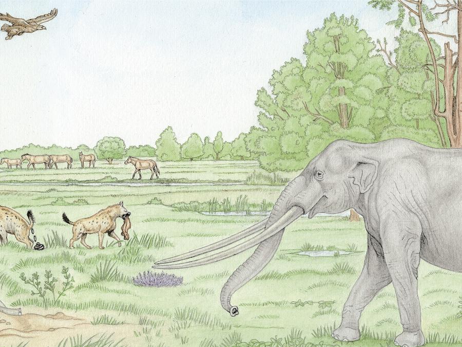 Mastodont 2