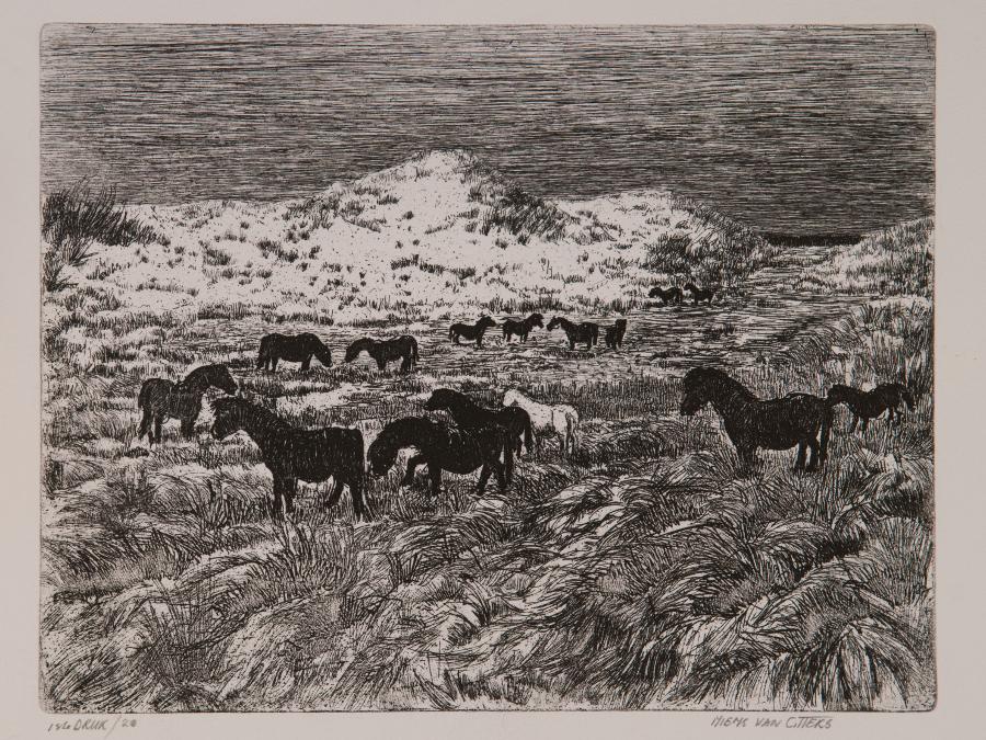 Paarden Zeepe