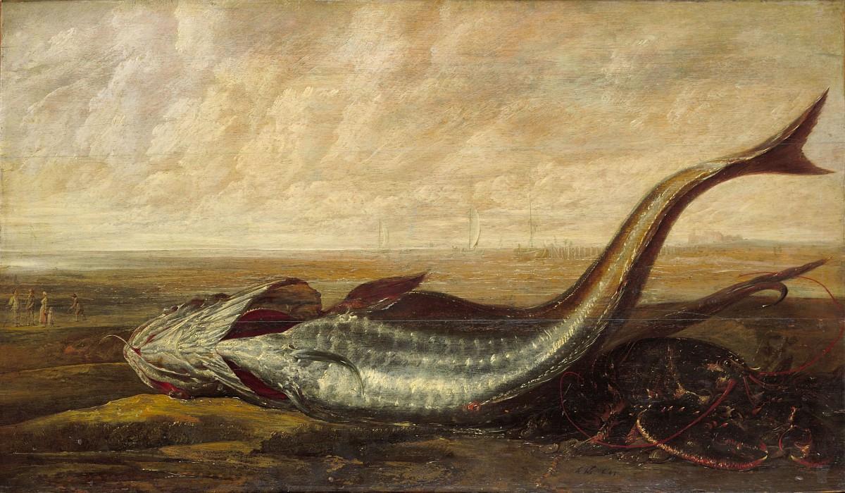 Een Kabeljauw En Andere Zeedieren Op Het Strand Gesigneerd En 1643 Gedateerd Olieverf Op Paneel 60 X 103 Cm Musée D'Ixelles Brussel (B)